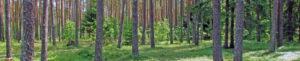 KASKOD-MTRONIX Loksa, Estonia